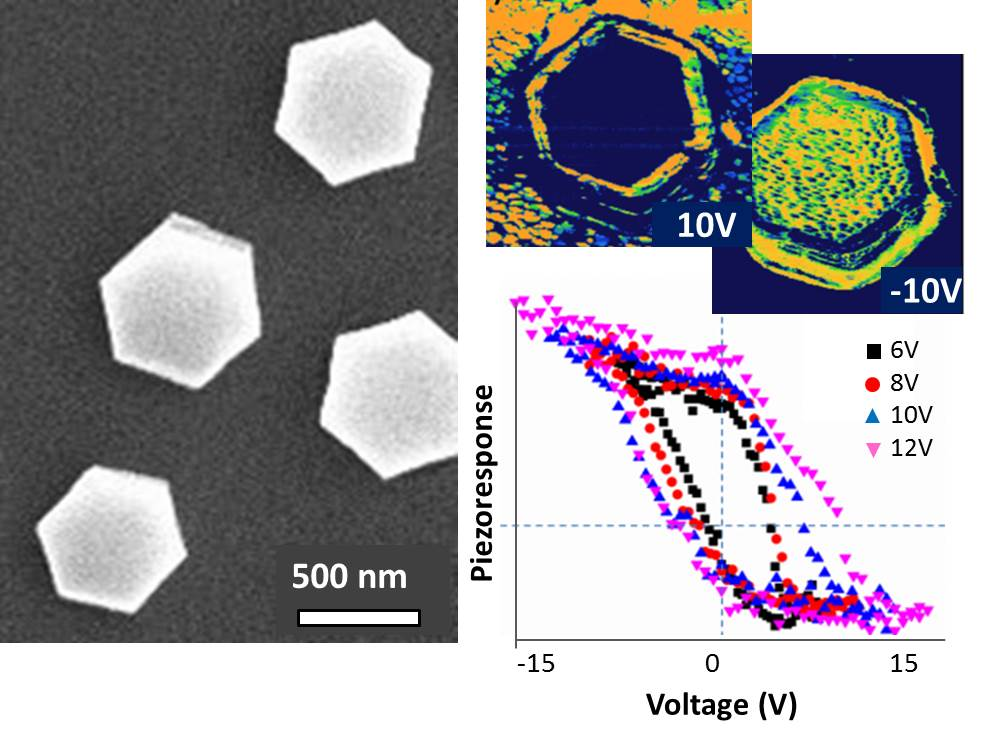 Resistive switching and polarization reversal of hydrothermal method grown undoped zinc oxide nanorods by using scanning probe microscopy techniques