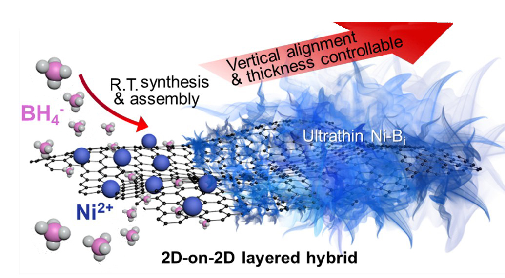 Ultrathin nickel boron oxide nanosheets vertically assembled on graphene: A new hybrid  2D materials for enhanced photo/electrocatalysis