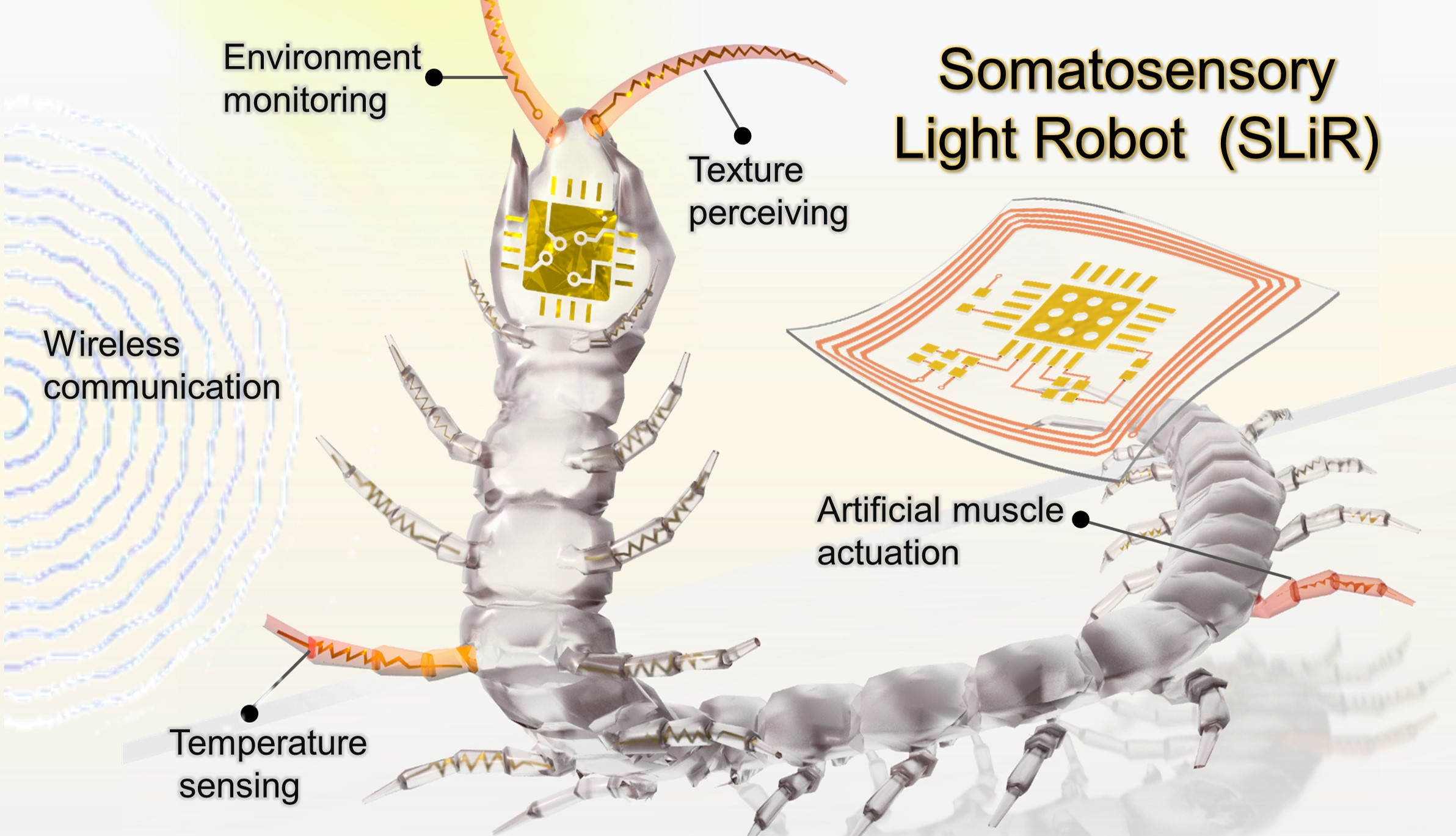 Somatosensory, light-driven, thin-film robots capable of integrated perception and motility